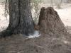 tree-rock-mound